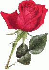 Nadin1 аватар